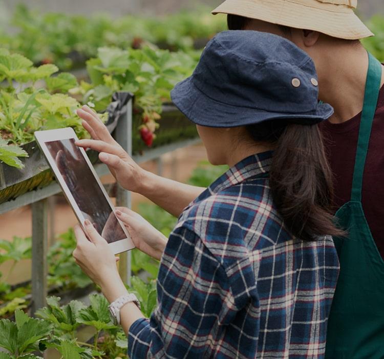 3 Tendências de Tecnologicas para o Agronegócio
